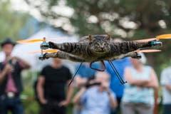 Kater Orville hebt ab - er war de Katze von Künstler Bart Jansen. (Bild: Keystone)