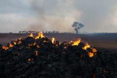 Die Feuerwehr in South Australia warnte angesichts der grossen Trockenheit in der Region vor einer «gefährlichen Situation». (Bild: Keystone)