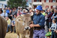Impressionen von der Urner Grossviehschau in Altdorf. (Bild: Urs Hanhart)