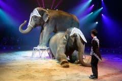 Chris Rui Knie präsentiert eine Elefantennummer. (Bild: Keystone)