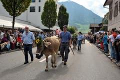 Dieses Tier verbrachte den Alpsommer auf der Wissifluh in Wolfenschiessen und kommt nun ins Tal zurück. (Bild: Christoph Riebli)