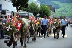 Auch diese reich geschmückten Tiere verbrachten Sommer auf der Ochsenweid auf dem Buochserhorn. (Bild: Christoph Riebli)