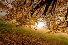Herbst in Rorschacherberg. (Bild: Cyrill Schlauri)