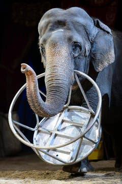 Die Elefanten-Vorführungen haben viele Menschen erfreut - nun wird es sie beim Circus Knie nicht mehr geben. (Bild: Keystone)