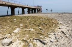 Ebbe im Bodensee: Der Steg beim Strandbad Arbon führt nicht übers Wasser, sondern über ausgetrockneten Seeboden. (Bild: Keystone)