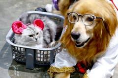 Freude haben sie nicht, aber verkleidet werden sie hin und wieder doch. Hier eine Katzmaus in Bangkok. (Bild: Keystone)