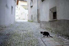 Auch Tiere, wie diese Katze, sind wieder in Bondo anzutreffen. (Bild: KEYSTONE/Gian Ehrenzeller)