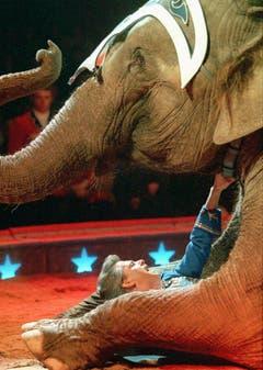 Nervenkitzel in der Manege: Franco Knie und einer seiner Elefanten im Jahr 1997. (Bild: Keystone)