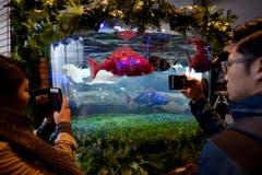 Natürlich sind auch die Fische im Hotel-Aquarium Roboter. (Bild: FRANCK ROBICHON (EPA))