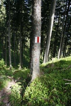 Am Baum wird auf Augenhöhe markiert. Es befindet sich auf beiden Seiten des Stammes ein Orientierungszeichen. (Bild: Jolanda Riedener)