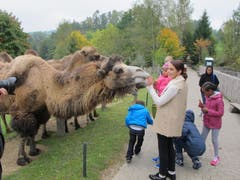 Kamele füttern macht allen Spass... (Bild: pd)