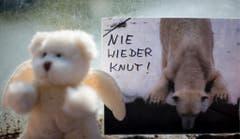 Dann, am 19. März 2011, ist Knut überraschend gestorben. (Bild: Keystone)