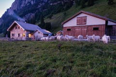 Die Alp Rainhütten nahe Brülisau. (Bild: Cyrill Schlauri)