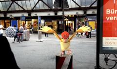 Ein Tauboga lässt sich am Treffpunkt in St.Gallen nieder. (Bild: Screenshot)