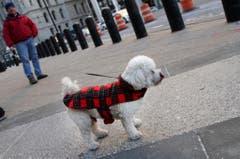 Glücklich jene Hunde, die ein Mäntelchen haben. (Bild: Keystone)