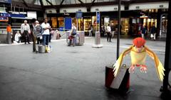 Ein wildes Tauboga am Bahnhof St.Gallen. (Bild: Screenshot)