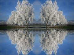 Eine wunderbare Spiegelung von Bäumen. (Bild: Toni Sieber)