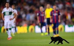 Frech: Bei einem Match der Spanischen La Liga zwischen FC Barcelona und Elche nutzte eine schwazre Katze den Rasen für eine kleine Verfolgungsjagd. (Bild: Keystone)