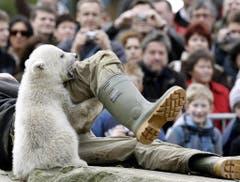 Dabei war Knut ein verstossenes Eisbären-Baby. Seit seiner Geburt am 5. Dezember 2006 wurde Knut aufgepäppelt, weil seine Mutter nichts von ihm wissen wollte. (Bild: Keystone)
