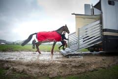 Bald im Trockenen: Ein Pferd wird abtransportiert. (Bild: Urs Bucher)