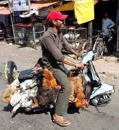 Dass es auch ohne kleine Käfige geht, beweist dieser Inder: Er transportiert seine Tiere per Vespa. (Bild: Keystone)