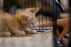 Zur Adoption: Wenn sie klein sind, sind sie besonders süss. (Bild: Keystone)