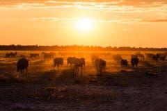 Der Etosha-Nationalpark im Norden Namibias. (Bild: Cyrill Schlauri)