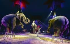 Familiensache: Franco Knie jun. und Ehefrau Frau Linna bei ihrer Elefantennummer. (Bild: Keystone)