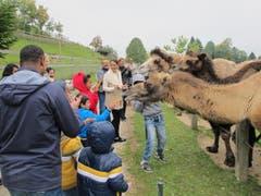 Futter für die Kamele. (Bild: pd)