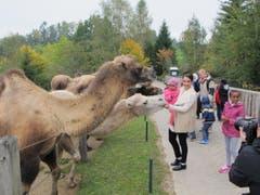 Die Miss Schweiz mit einem Flüchtlingskind auf dem Arm bei den Kamelen. (Bild: pd)