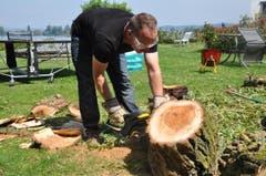 Ein Mann räumt in Ermatingen mit der Motorsäge einen Baumstamm weg. (Bild: Viola Stäheli)