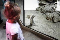 Wer beobachtet hier wen? Eine Begegnung zwischen Kleinkind und Waran. (Bild: Michel Canonica)