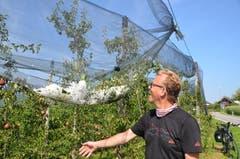 Überreste des Hagelschlags liegen in den Schutznetzen von Obstbauern am Untersee. (Bild: Margrith Pfister-Kübler)