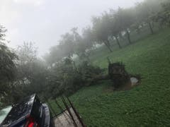 Der Sturm hat ganze Bäume entwurzelt. (Bild: PD)