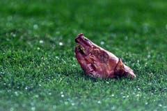 Schweinekopf auf dem Rasen: Barcelona-Fans geben im November 2002 auf diese Art ihrer Verachtung für Luis Figo Ausdruck. Dieser hat die Fronten gewechselt und gastiert mit seinem neuen Team Real Madrid bei Barcelona. (Bild: Keystone)