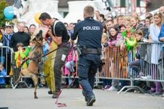 Polizeihunde-Vorführung an der Wega. (Bild: Donato Caspari)