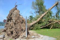 In der Mammermer Badi hat der Sturm einen Baum samt Wurzel ausgerissen. (Bild: Margrith Pfister-Kübler)