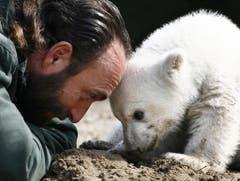 Mit Knut erlangte auch sein Tierpfleger Thomas Dörflein Berühmtheit. (Bild: Keystone)