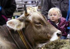 Ein Mädchen bestaunt eine Kuh. (Bild: Keystone)