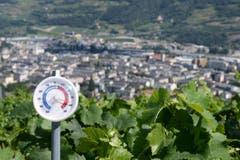 In Sitten (hier in einem Weinberg oberhalb der Stadt) wurden 37,2 Grad gemessen. (Bild: Keystone)