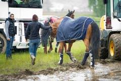Ein Pferd wird nach der Absage für den Abtransport vorbereitet. (Bild: Urs Bucher)