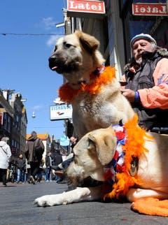 Diese zwei Hunde sind Royal-Fans. (Bild: Keystone)