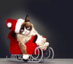 Berühmt ist sie aufgrund ihres mürrischen Gesichtsausdrucks: Grumpy Cat. (Bild: Keystone)