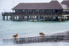 Sturmtief Burglind ist in Rorschach am Hafen deutlich spürbar. (Bild: Urs Bucher)