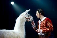 Maycol Errani, Ehemann von Géraldine Knie, geht mit Lamas auf Tuchfühlung. (Bild: Keystone)