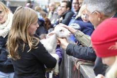 Putzig: Ein Lamm lässt sich von Besuchern streicheln. (Bild: Hanspeter Schiess)