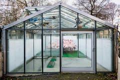 """Im Berner Tierpark Dählhölzli sind Flamingos in einem Glashaus eingeschlossen, um die Gefahr der Vogelgrippe zu verringern. Das Foto des Waadtländer Fotografen Anthony Anex gewann in der Kategorie """"Aktualität"""". (Bild: Swiss Press Photo/Anthony Anex)"""