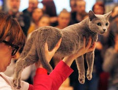 Poland: Hier zeigt die Besitzerin ihre schöne Katze. (Bild: Keystone)