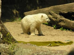 Fast elf Millionen Menschen kamen zu Knuts Lebzeiten in den Zoologischen Garten. (Bild: Umberto W. Ferrari)