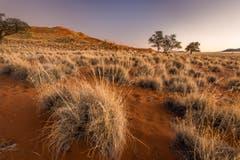 Elim-Düne bei Sossusvlei in der Namib-Wüste. (Bild: Cyrill Schlauri)
